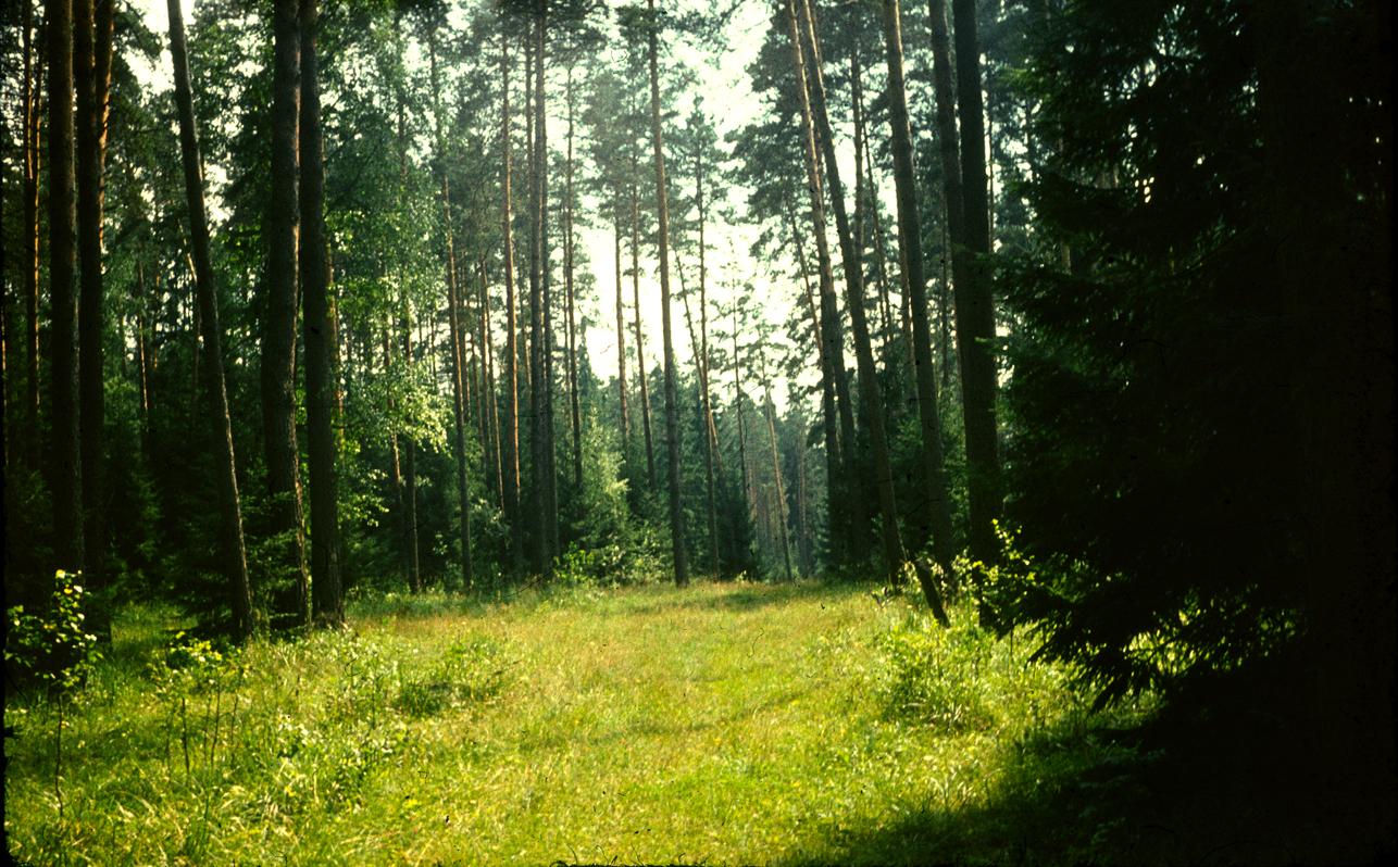 картинки темного леса