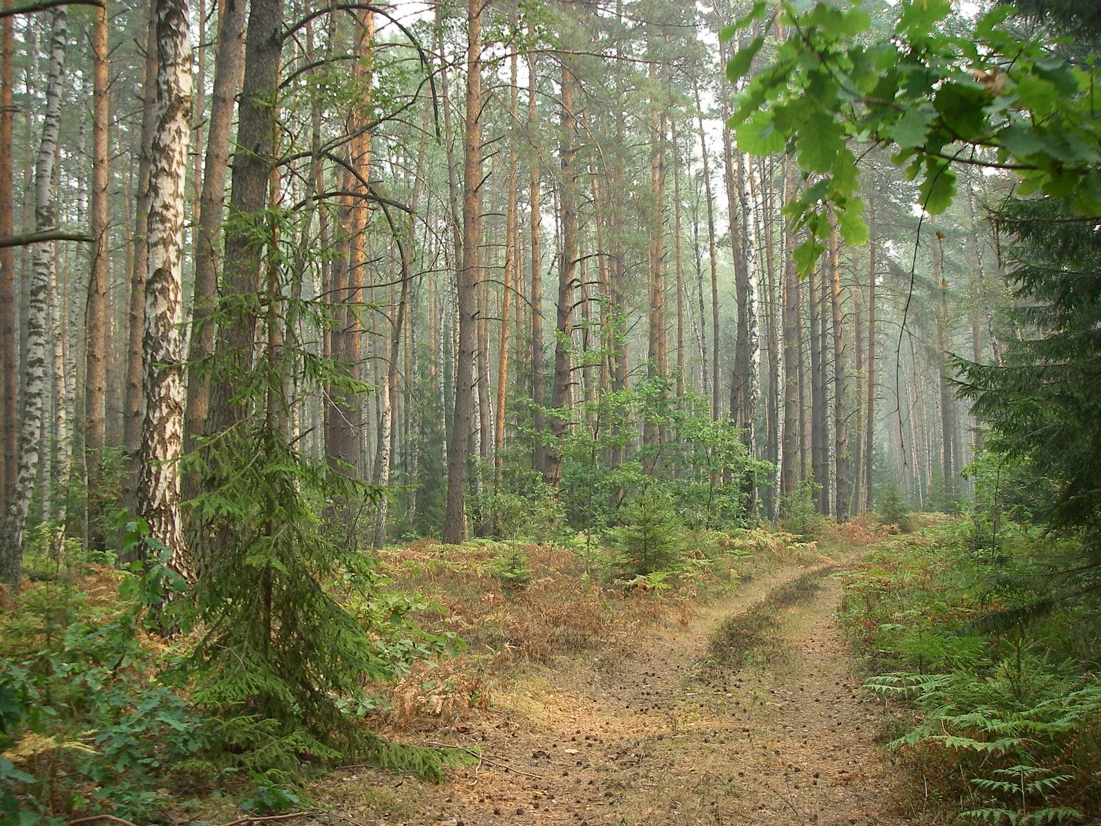 Лекция о заповеднике брянский лес фото 8
